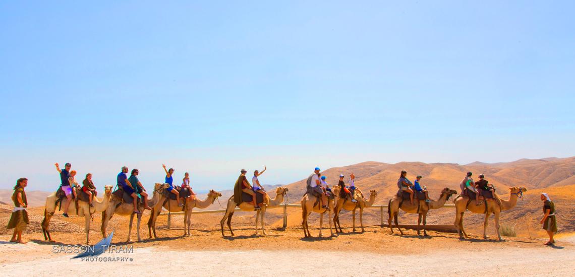 Camel Caravan in the Judean desert – Gensis land